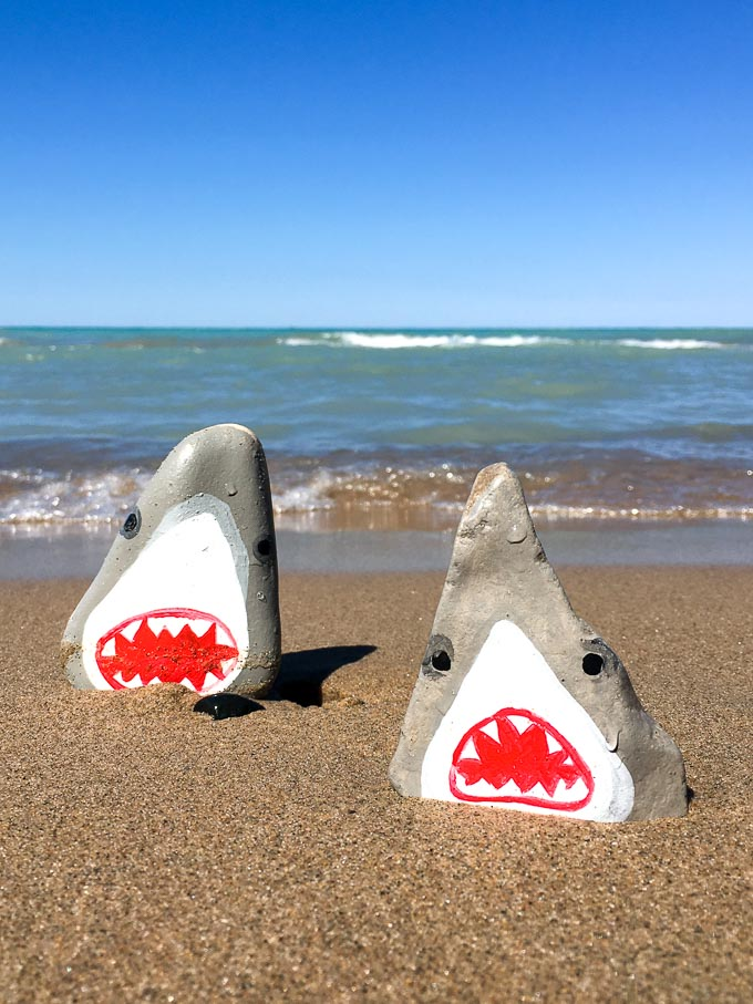 Shark painted rocks