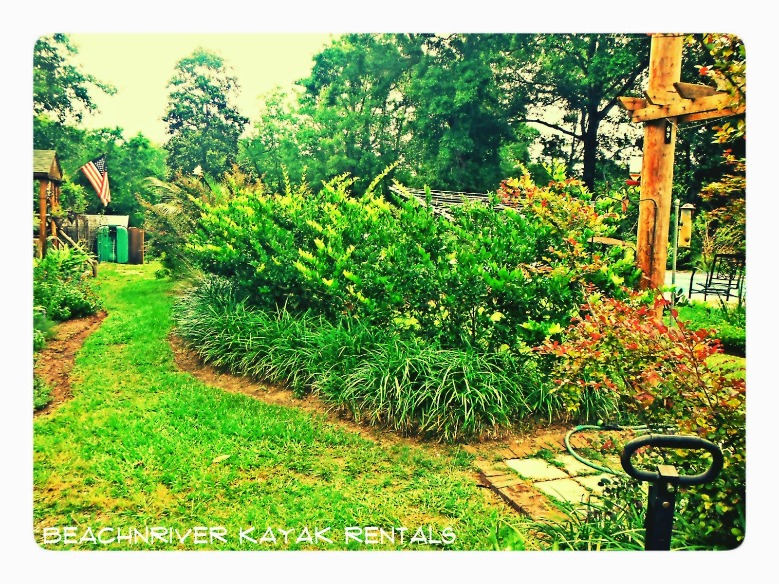 "The ""green"" of the property at BeachnRiver Kayak Rentals promotes a calm coolness."