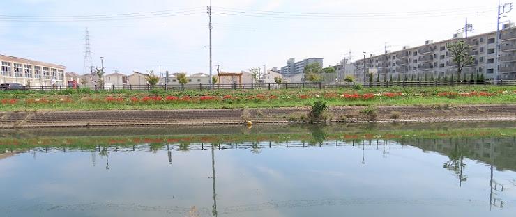 彼岸花の咲く風景