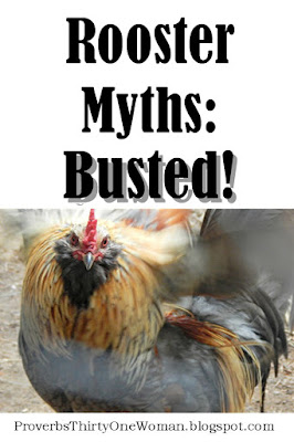 8 Rooster Myths