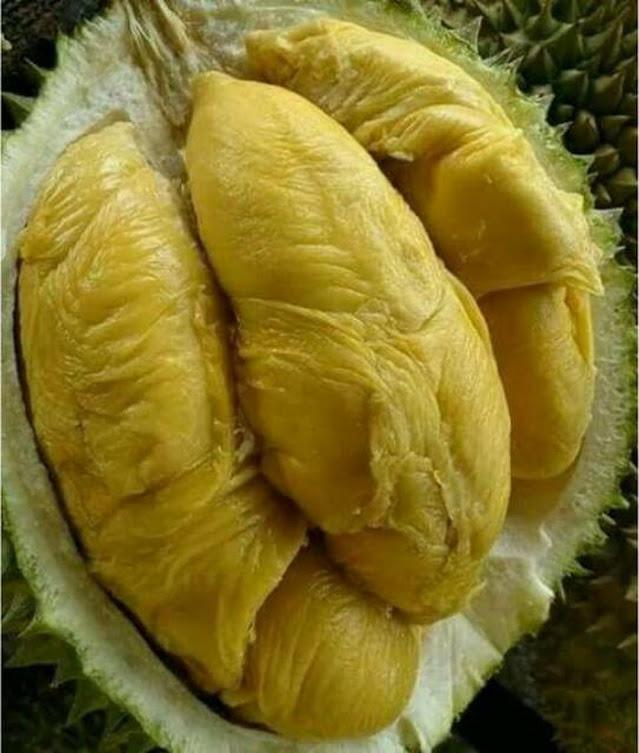 Bibit Durian Bawor okulasi super Sungai Penuh