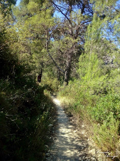 caminos llenos de pinos y verde de matorral bajo