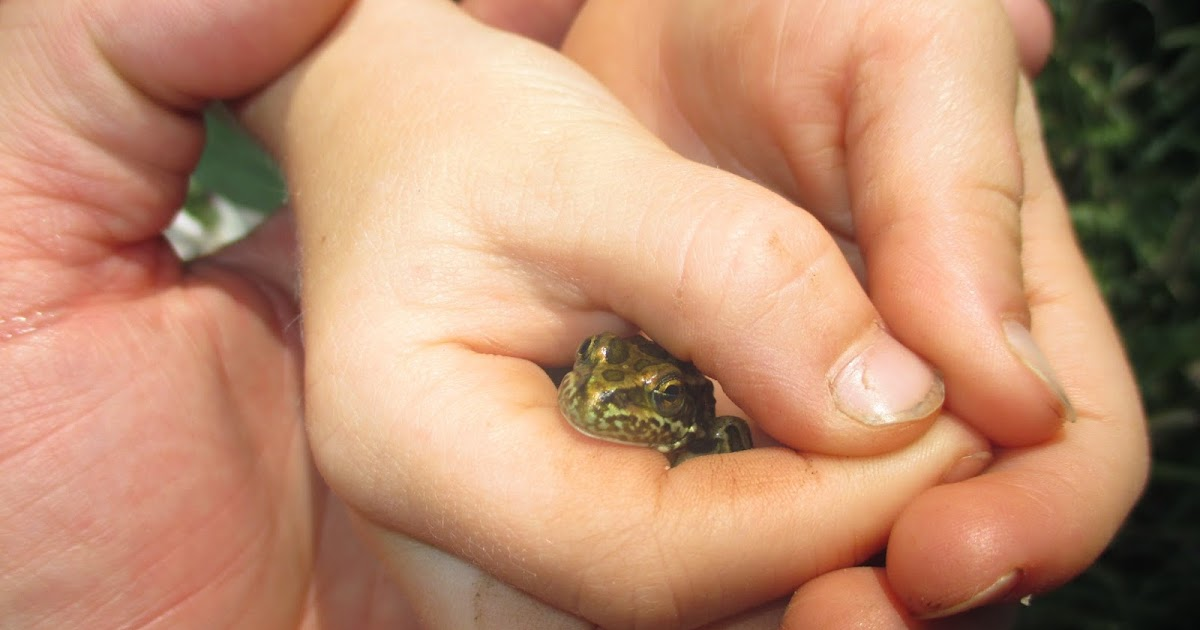 Backyard Excursions: Catching Frogs at Hidden Lake