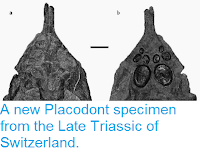 http://sciencythoughts.blogspot.co.uk/2015/01/a-new-placodont-specimen-from-late.html