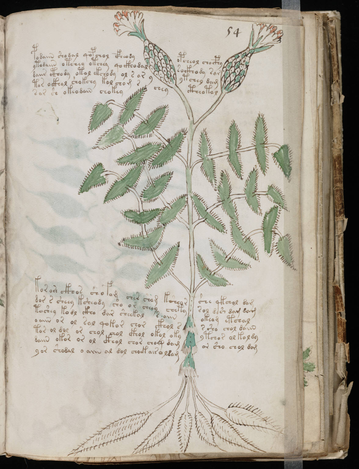 manuscrito105