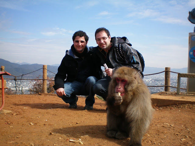 Macaco japonés en Arashiyama en Kioto