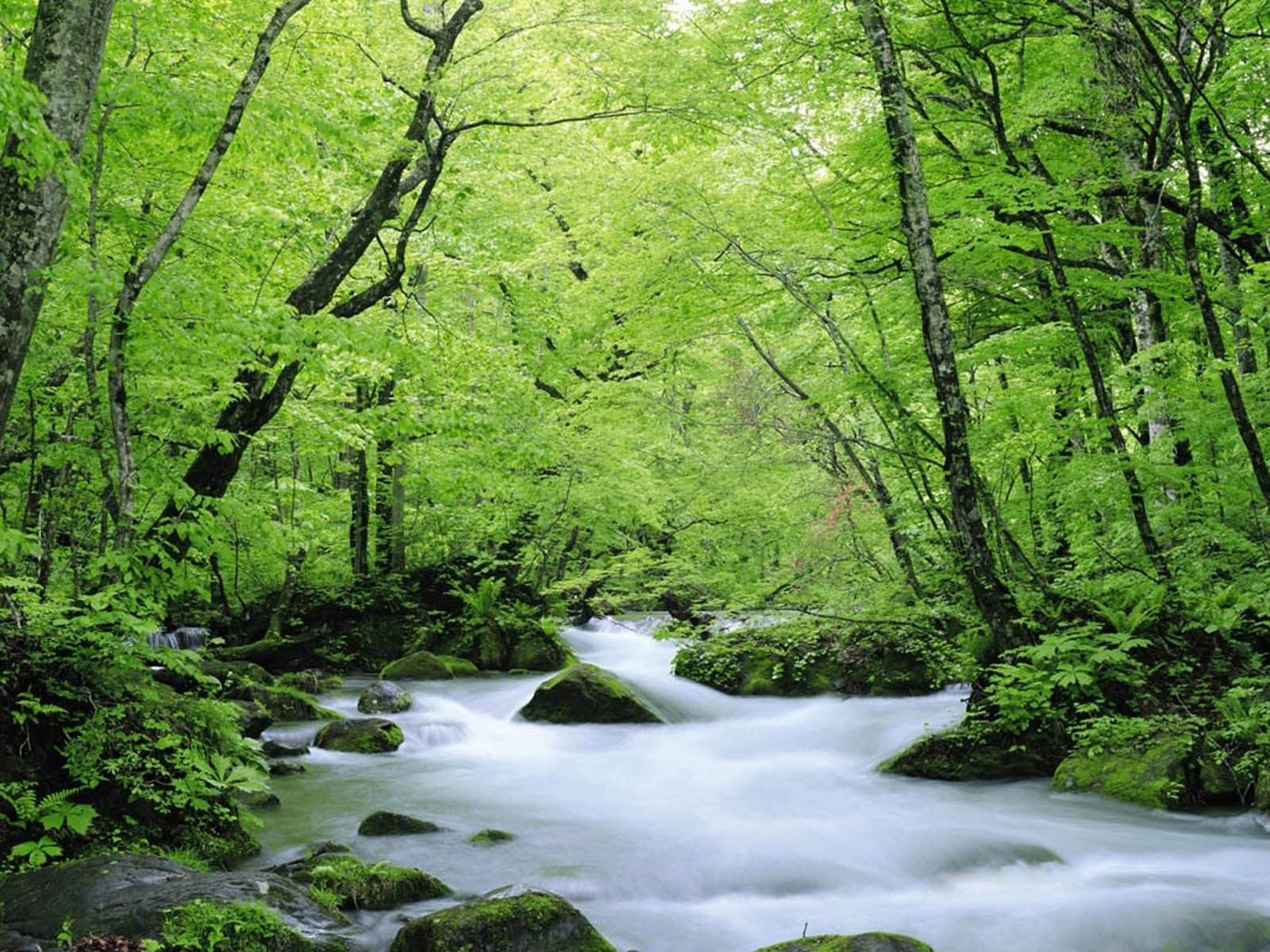 Wallpapers green nature wallpapers - Background images nature ...