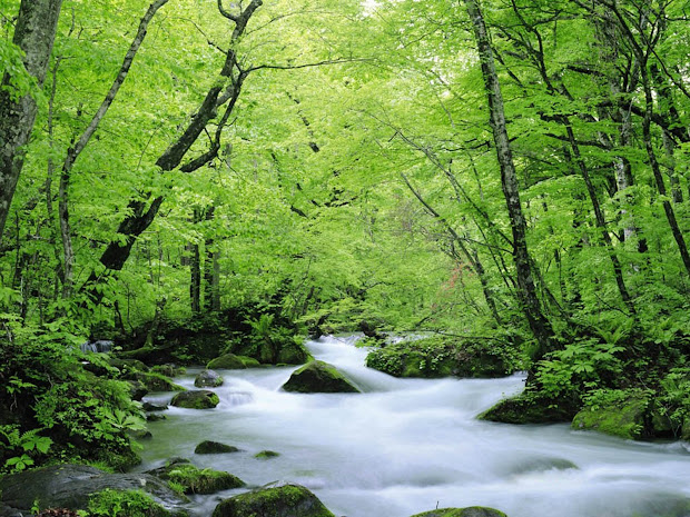 Wallpapers Green Nature