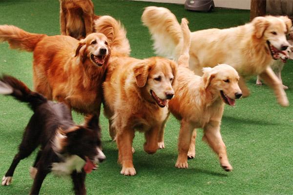 adopt a pet Nomes Para Cães Unissex com a letra A