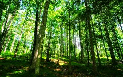 Ötszáz hektár dzsungelt teremtett egyedül az indiai férfi