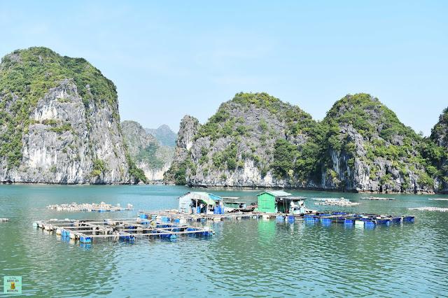 Fishing village en isla de Cat Ba