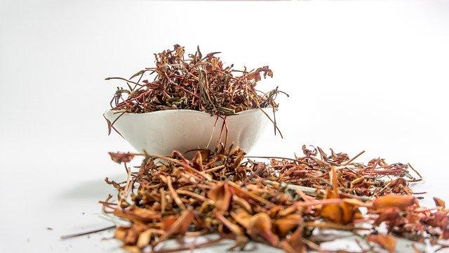 Ashwagandha | A baby shrub with mighty benefits