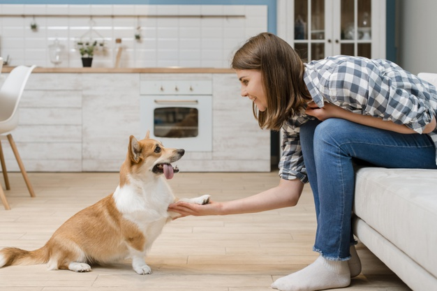 'Sit Up' Buddy: Training Your Dog To Sit Like You