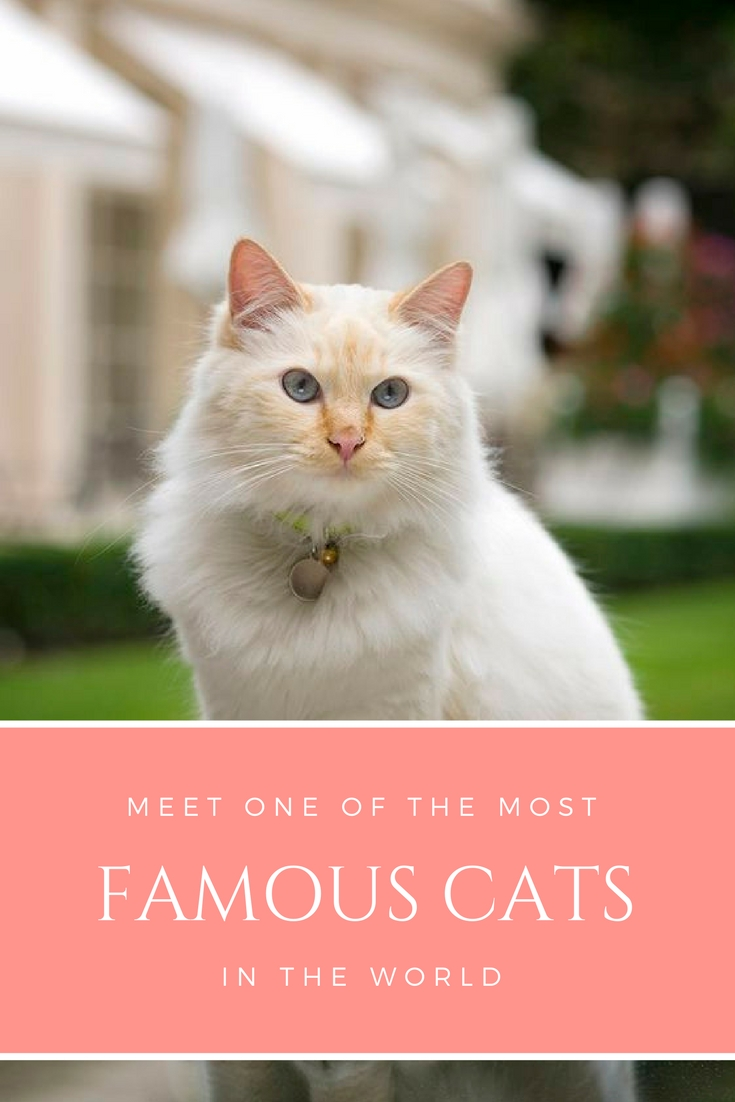 most famous cats