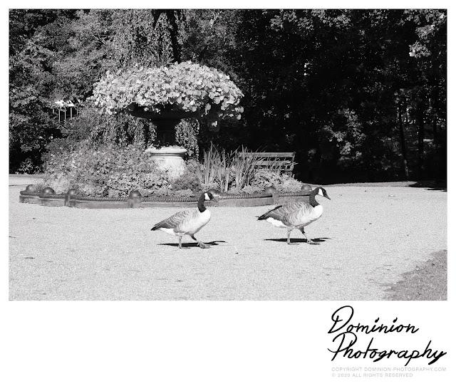 Buxton - Pavilion Gardens