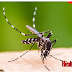 Some Home Remedies for Mosquito Infestation, Some Home Remedies for Mosquito Infestation