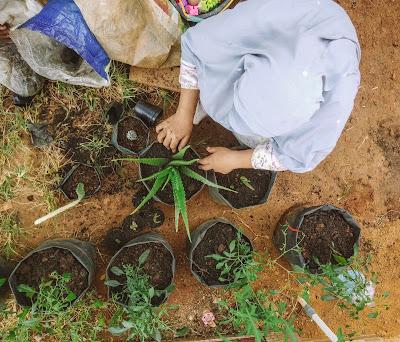 berkebun dan menanam tanaman di rumah