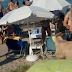 Τράγος έκοβε βόλτες σε γνωστό beach – bar γεμάτο κόσμο στη Χαλκιδική (VIDEO)