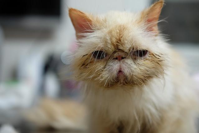 Surgery | Cat Only Veterinarian | Marietta, GA