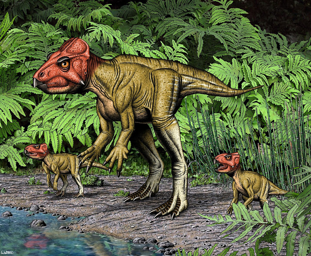 Small horned dinosaur from China, a Triceratops relative, walked on two feet