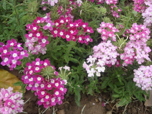 Winter Times Of India Source Some Pretty Flowers Which Name To My Shame I  Don T