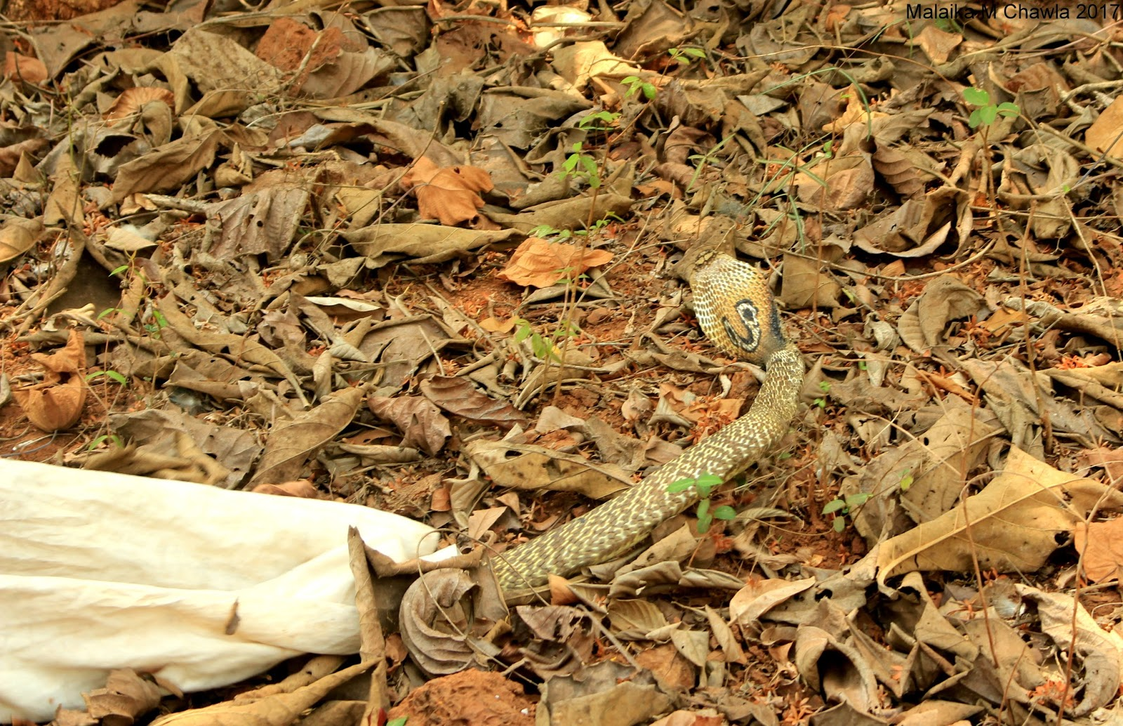 Travelling Lens: Crocodile Survey, Otter Scat and a Five ... - photo#46