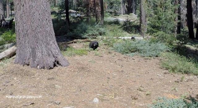 Orsi in california