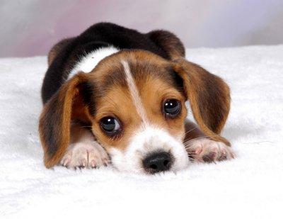 De Perros Blog 2012