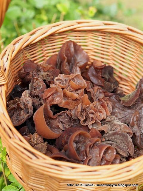 ucho bzowe, uszak bzowy, kiszonki, przetwory, grzybobranie, jaki to grzyb, grzyby jadalne, sezon na grzyby, Auricularia auricula judae
