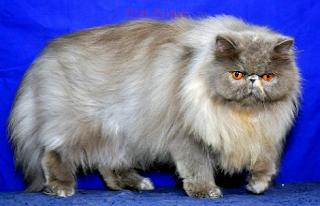 3 Cara mudah Merawat Kucing Agar Gemuk dan Bulunya Bagus