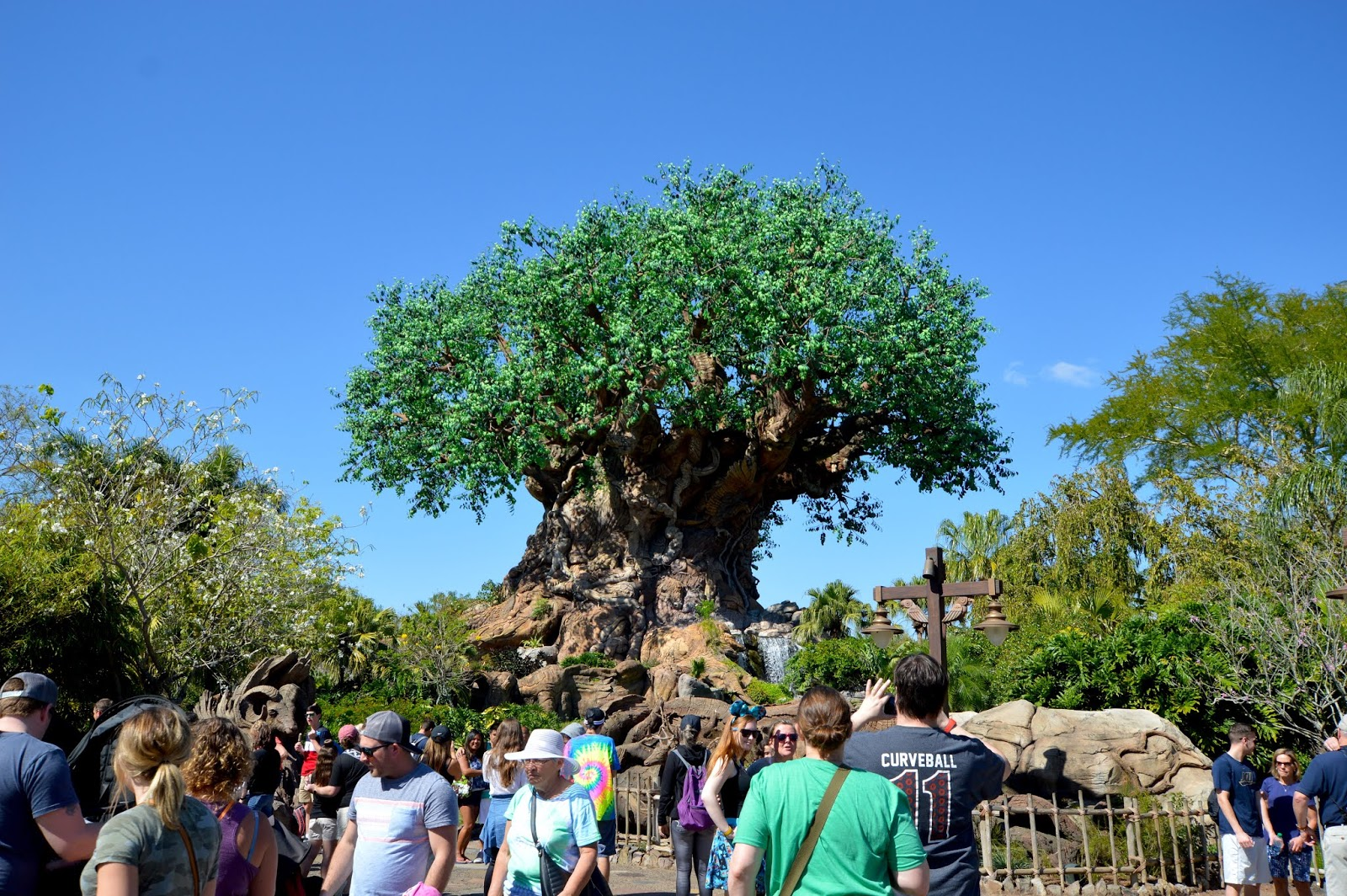 Animal Kingdom Disney