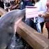 Δελφίνι πετάχτηκε από το νερό και της πήρε το iPad! (video)