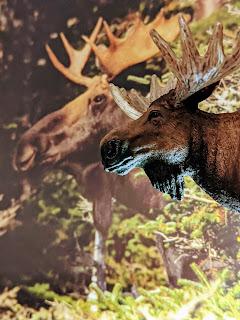 A Pair Of Moose