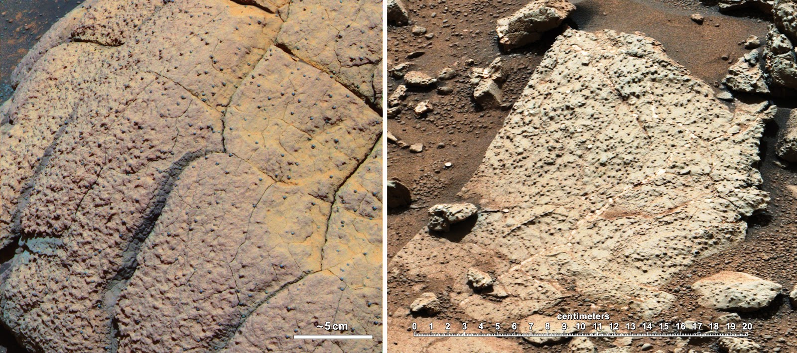 mars rover finds animal - photo #41
