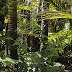 Amazonian kasvien levinneisyyden kartoittamiseen tarvitaan parempia maaperäkarttoja