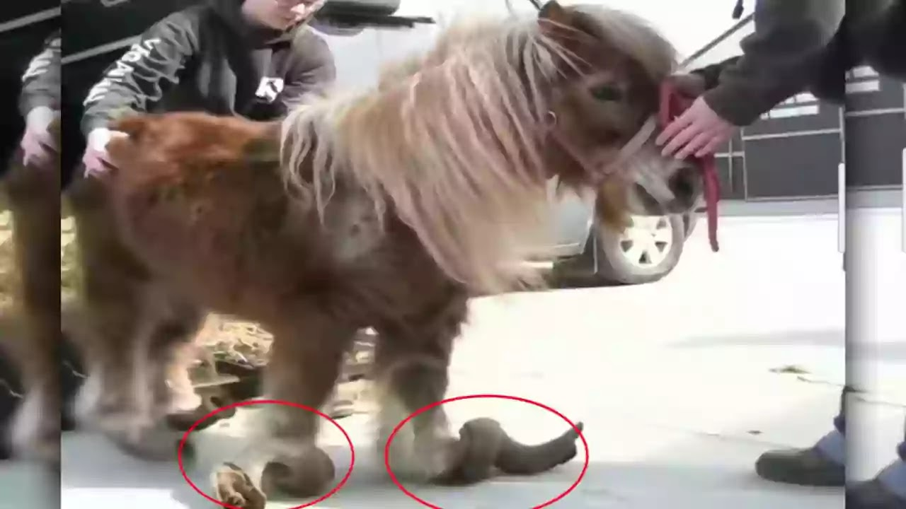Sheep, Horse, Donkey, Turtle, Barasingha, Wild Boar   Five animals that die because of their own body parts   Horses-Donkey-die-because-of-own-body-parts