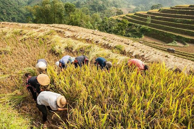 Hoang Su Phi Ha Giang 3