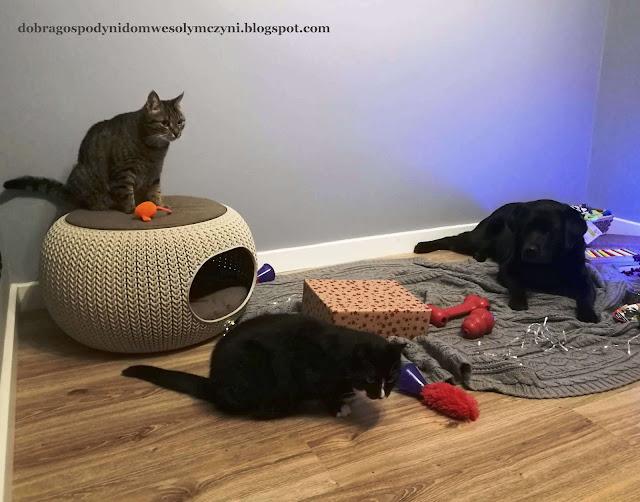 zwierzęta w domu, kot w domu, pies w domu, jak pies z kotem