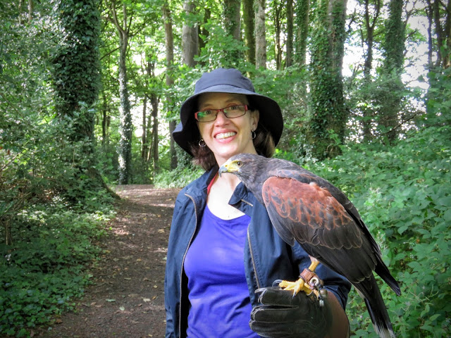 On a hawk walk with a Harris Hawk at Mount Falcon estate in County Mayo, Ireland