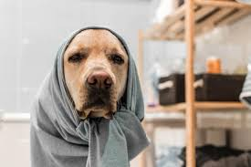 Tener una mascota enferma en casa puede ser muy estresante para sus dueños, ya que uno pasa todo el tiempo buscando medicamentos y tratamientos para ellos.