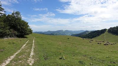 Matzendörfer Stierenberg, knapp 1200 m