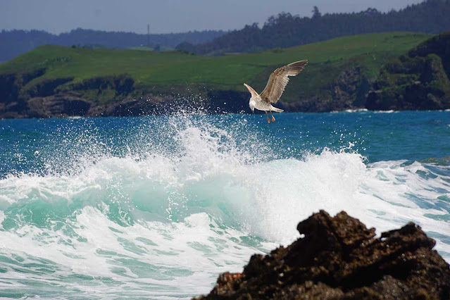 California Fly Fishing