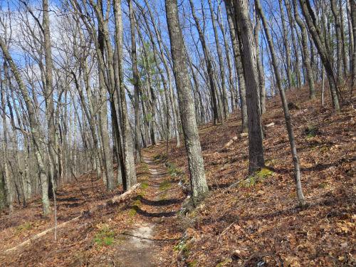 Shanty Boy Trail