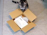 返送されてきたSSDの段ボールを覗き込む猫1匹