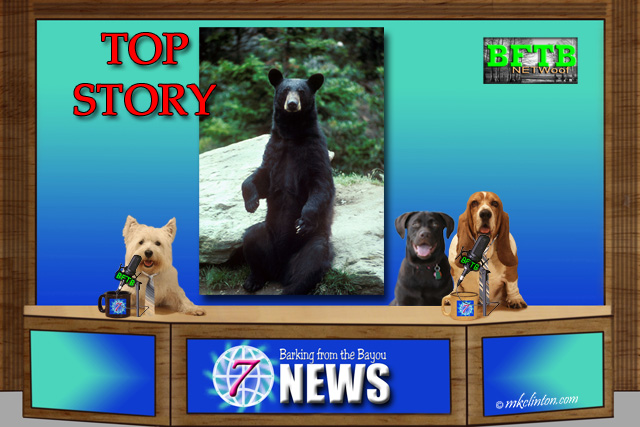 BFTB NETWoof News Top Story with black bear