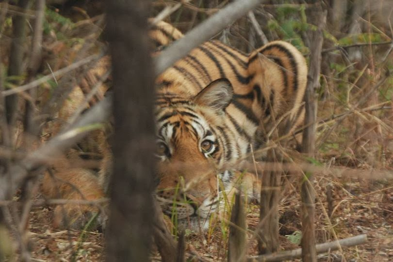 wildlife conservation india Wildlife conservation wildlife is the most ignored and most vulnerable among all living india has a wide range of biodiversity due to its geographical.