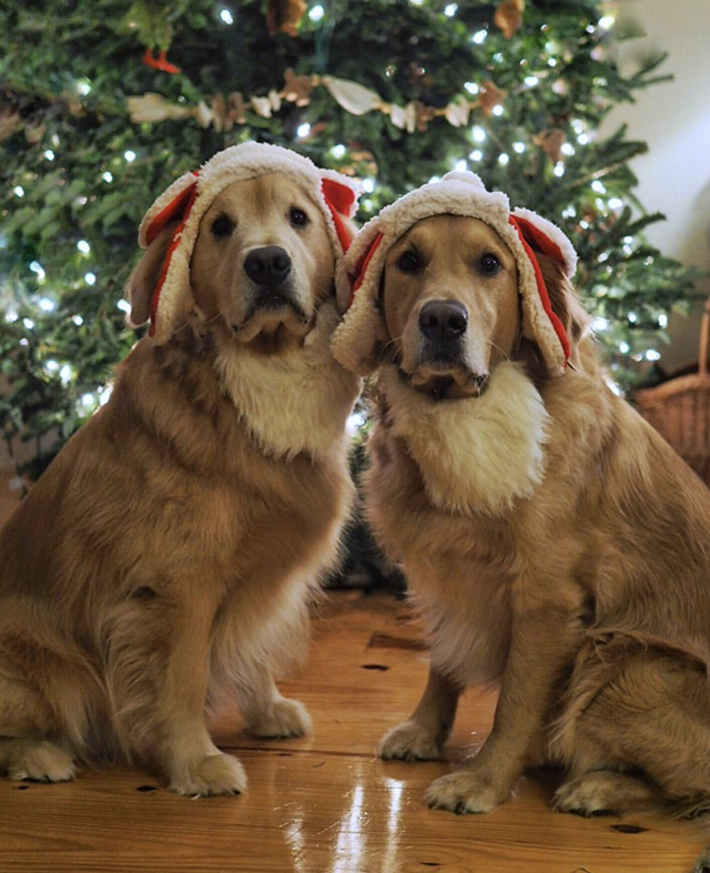 Golden Retrievers Christmas Tree