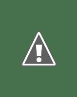 National bird of India - Indian peacock