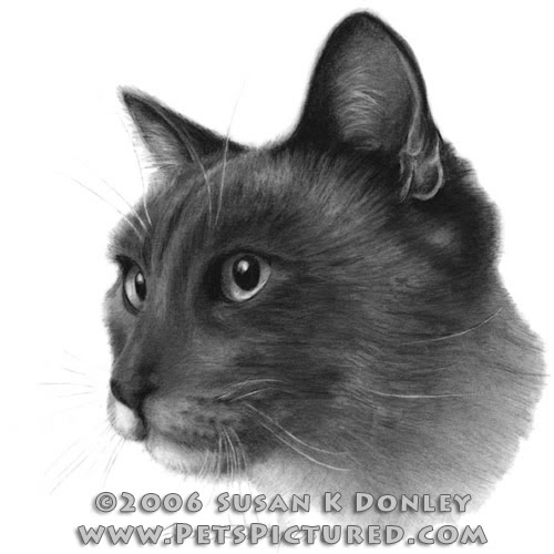 04-Siamese-Cat-Susan-Donley-Cats-and-Dogs-Featured-in-Pencil-Portraits-www-designstack-co