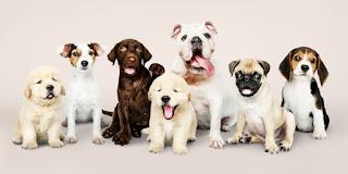 Köpek Fotoğrafları ile ilgili aramalar sevimli köpek fotoğrafları  köpek fotoğrafları indir  köpek fotoğrafları pitbull  köpek fotoğrafları tumblr  kangal köpek fotoğrafları  köpek fiyatları  köpek cinsleri  köpek videoları